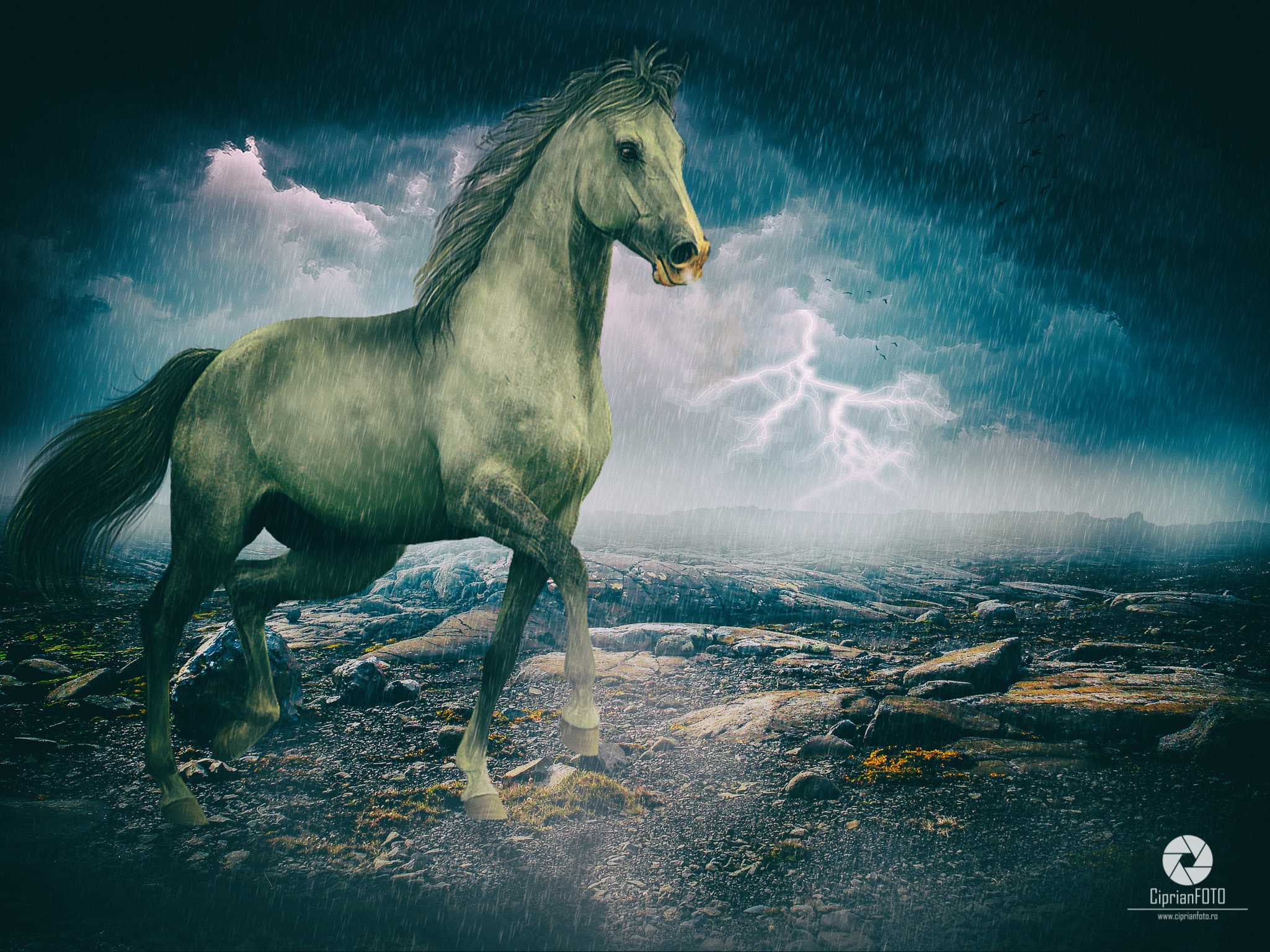 The Horse, Photoshop Manipulation Tutorial, CiprianFOTO