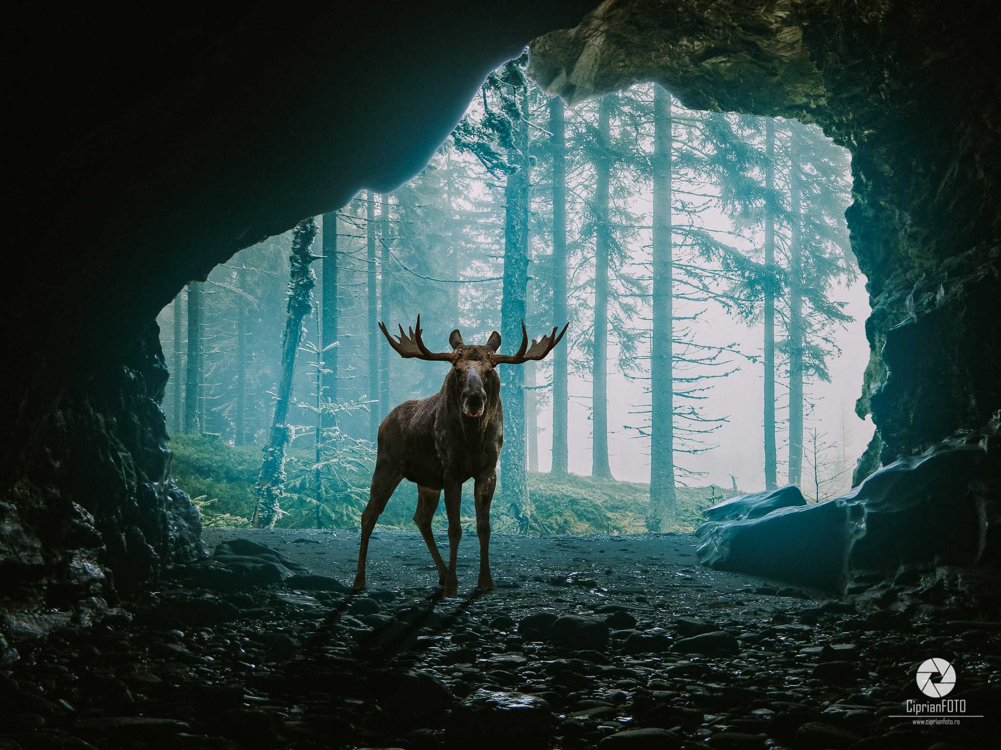 Moose In Cave, Photoshop Manipulation Tutorial, CiprianFOTO