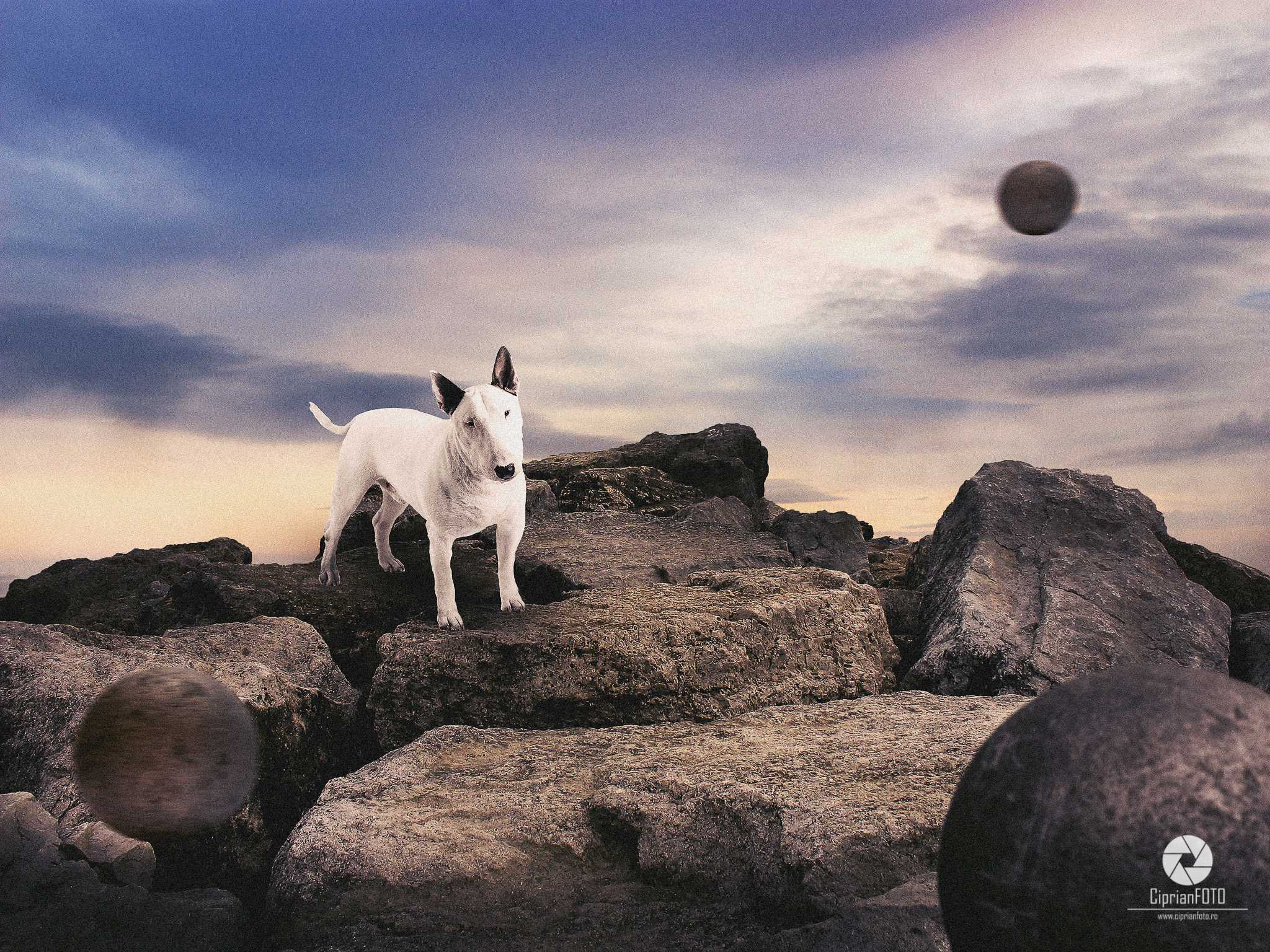 Bull Terrier Upon The Rock, Photoshop Manipulation Tutorial, CiprianFOTO