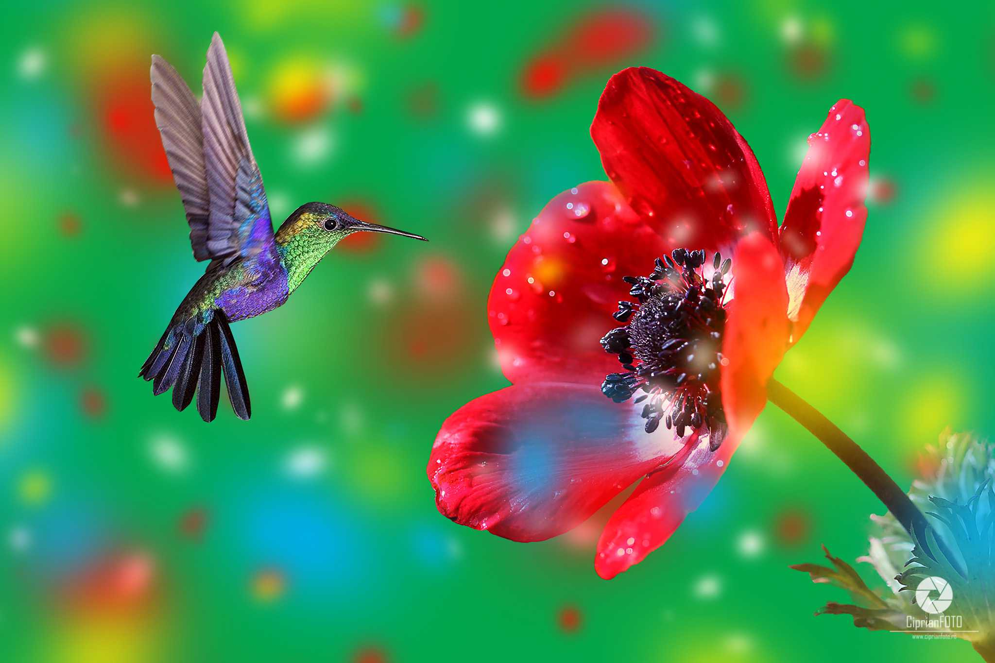 Hummingbird, Photoshop Manipulation Tutorial, CiprianFOTO
