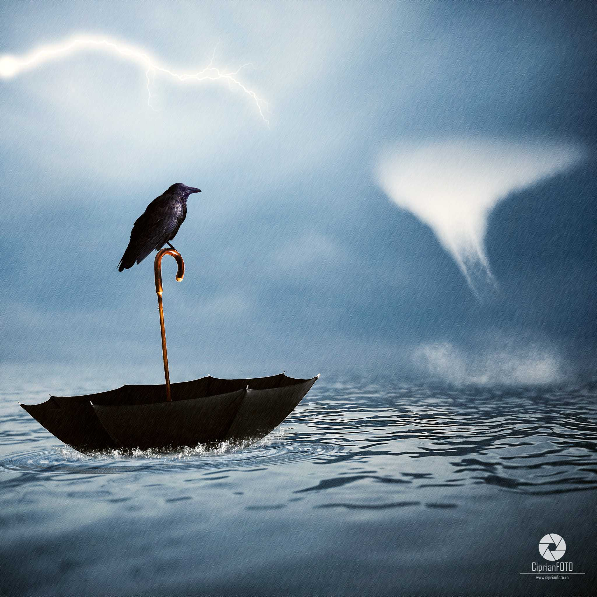 Lost Crow, Photoshop Manipulation Tutorial, CiprianFOTO