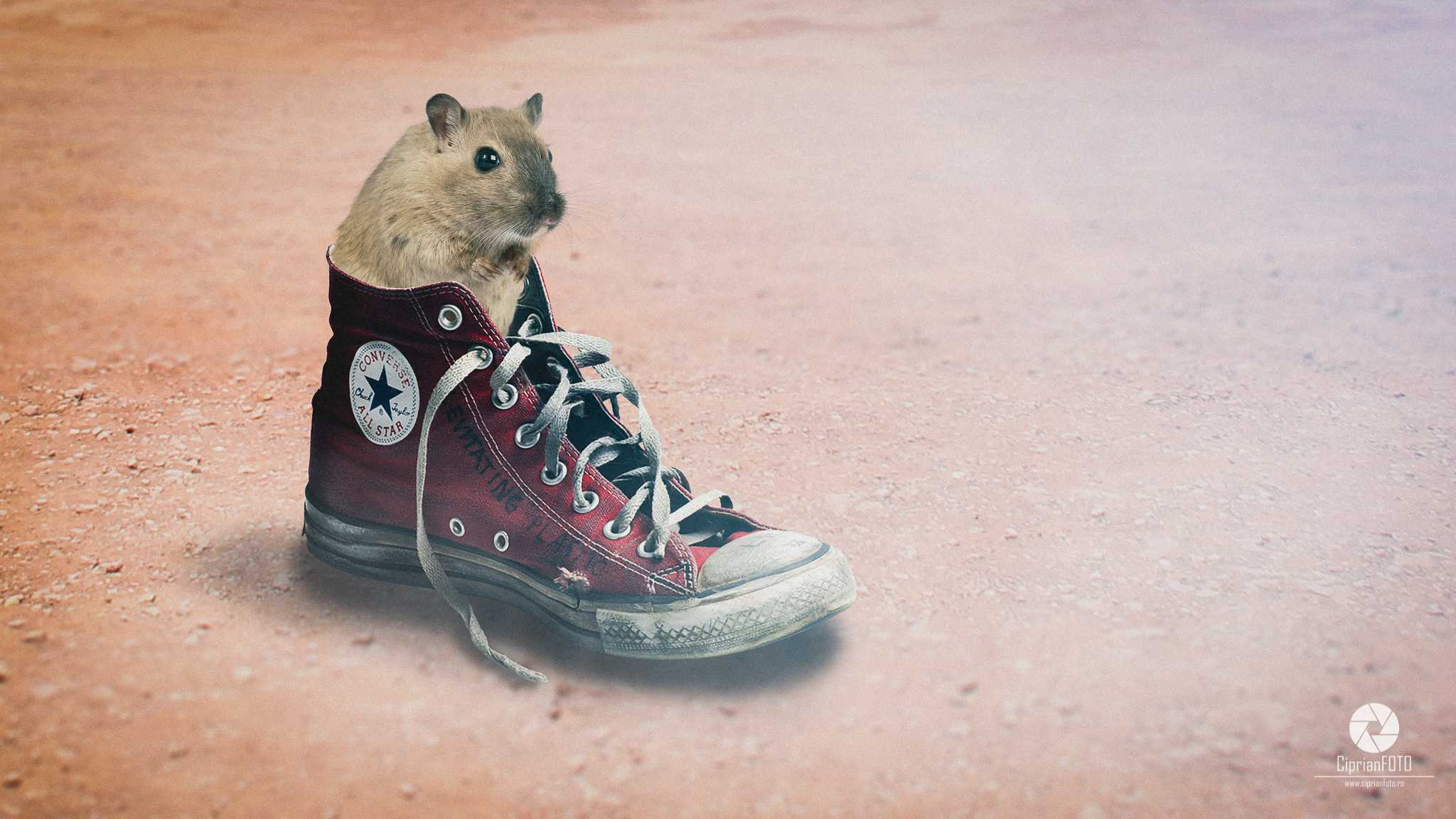 Hamster In The Old Converse Shoe, Photoshop Manipulation Tutorial, CiprianFOTO