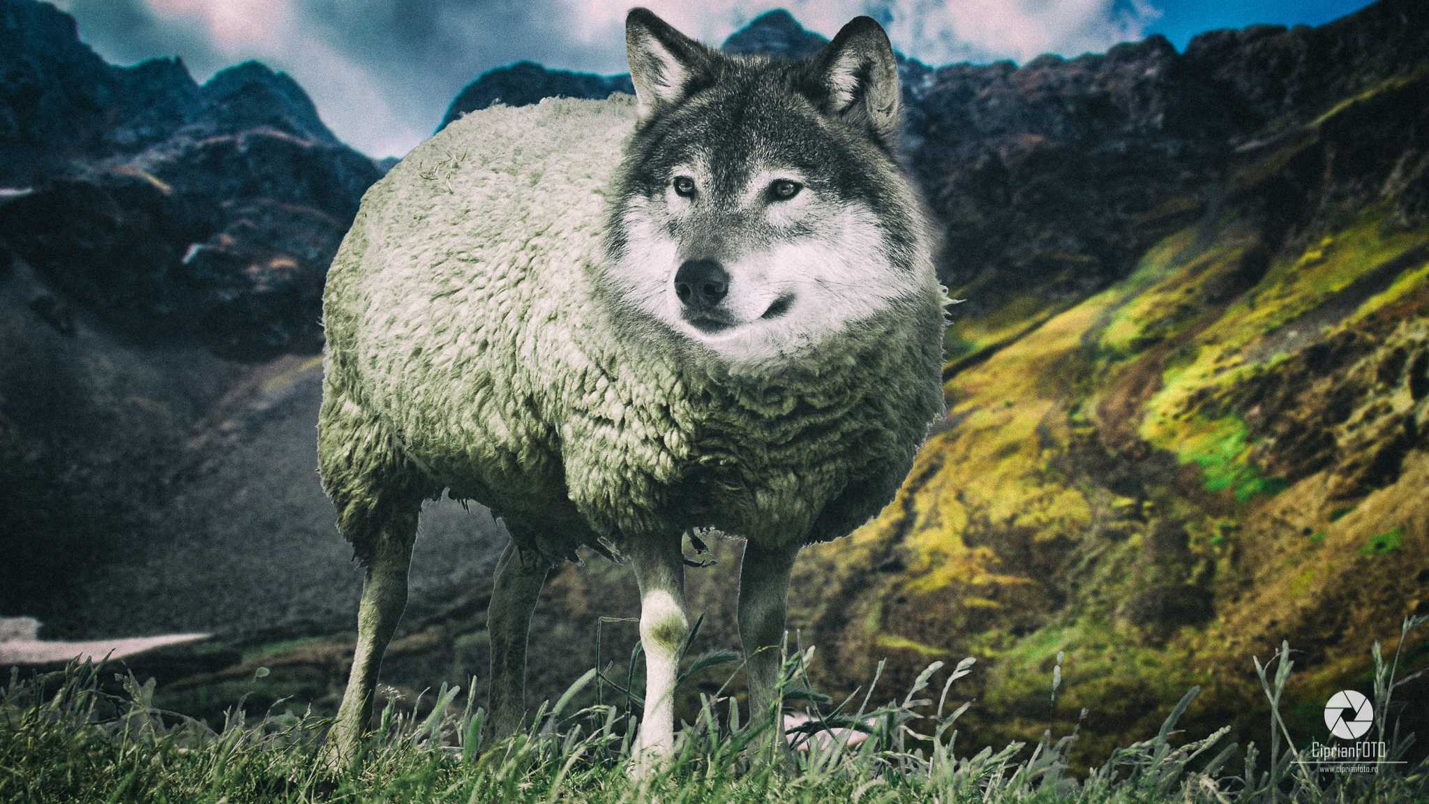 A Wolf In Sheep's Clothing, Photoshop Manipulation Tutorial, CiprianFOTO