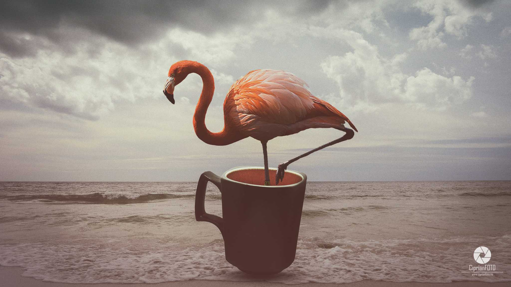 Flamingo Bird In Coffee Cup, Photoshop Manipulation Tutorial, CiprianFOTO