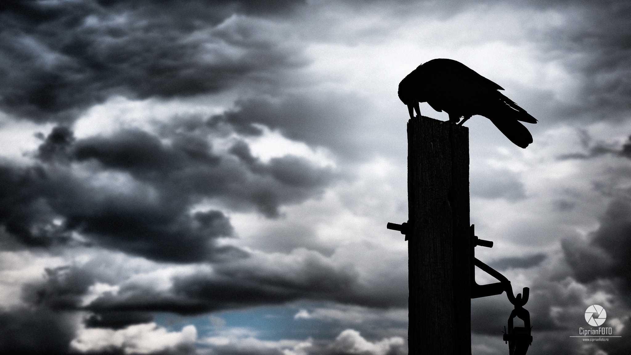 The Raven, Photoshop Manipulation Tutorial, CiprianFOTO