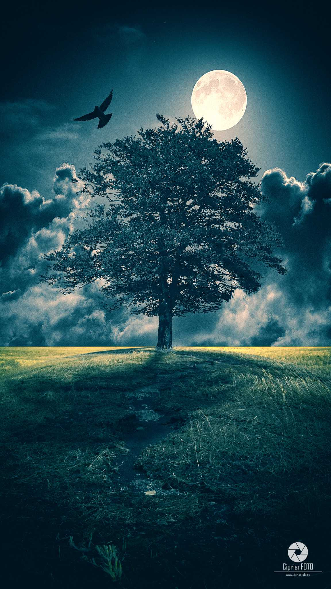 The Tree, Photoshop Manipulation Tutorial, CiprianFOTO