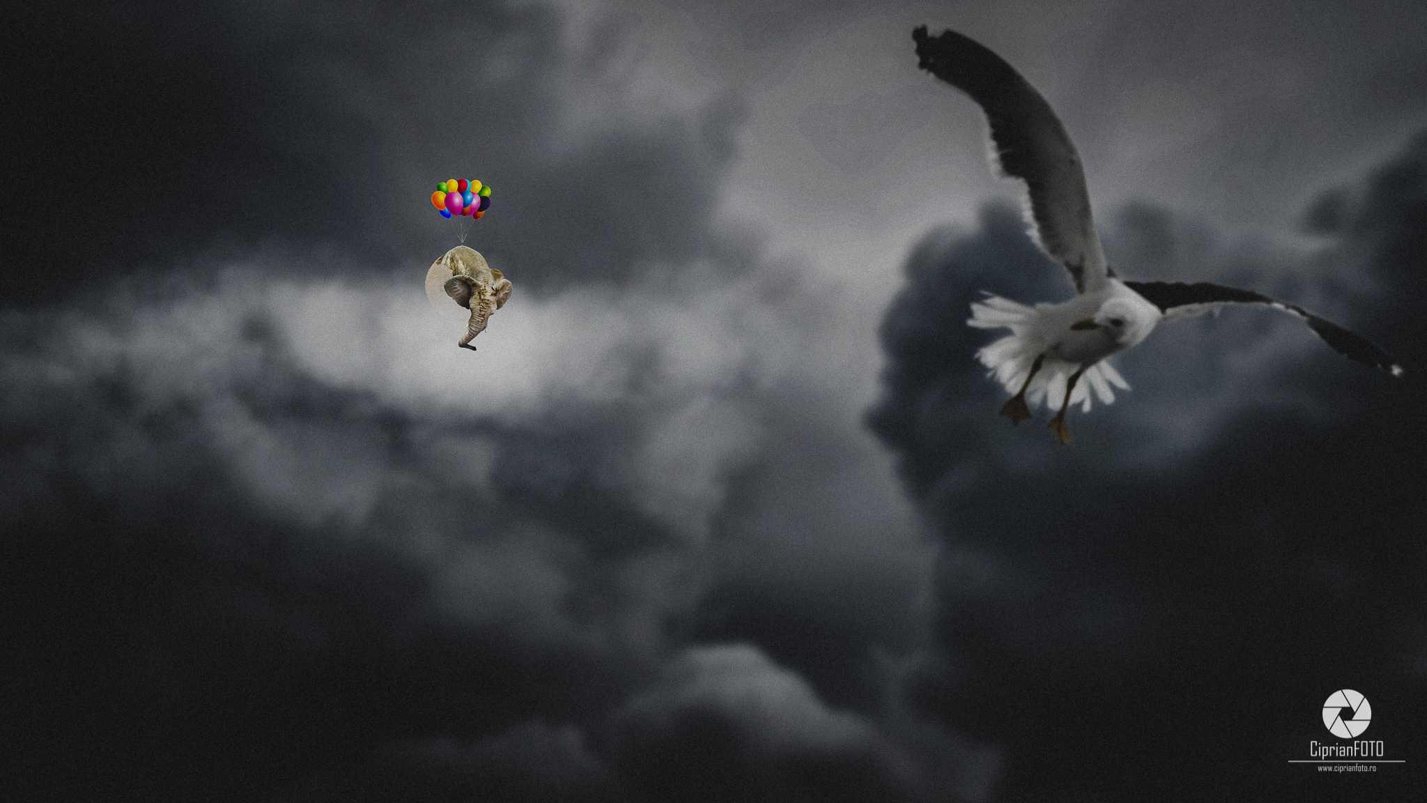 Flying_Elephant_Photoshop_Manipulation_Tutorial_CiprianFOTO