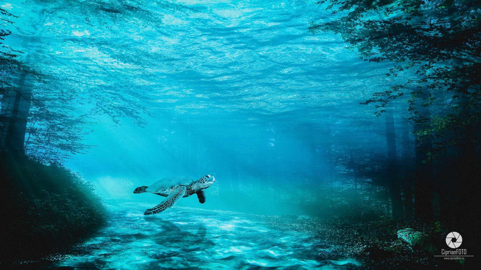 Underwater_Life_Photoshop_Manipulation_Tutorial_CiprianFOTO