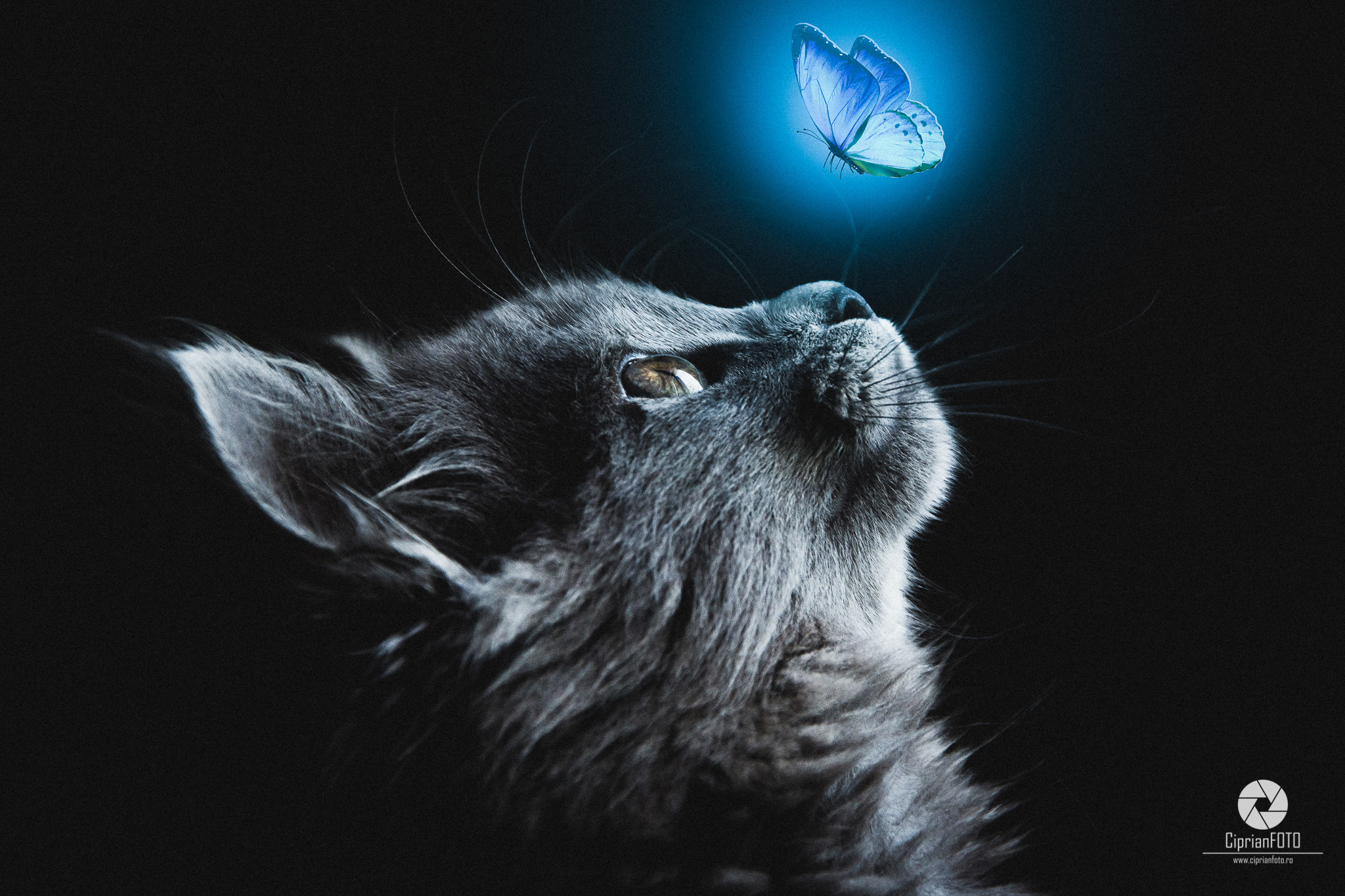 Photoshop Manipulation Tutorial, Cat and blue butterfly, CiprianFOTO